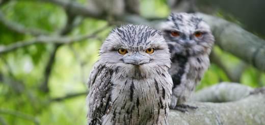 Top 10 Weird Looking Birds