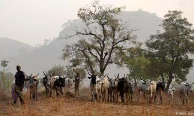 Dead bodies of four suspected herdsmen discovered in Nsukka