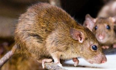 Lagos records first case of Lassa Fever in LUTH