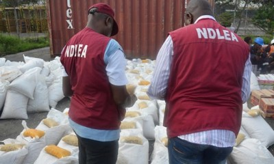 How NDLEA nabbed 200 suspects over 2,083,369kgs of illicit drugs in Adamawa-TopNaija.ng