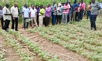 Maize-Farm-Destroyed-By-Fulani-Herdsmen-in-Ekiti