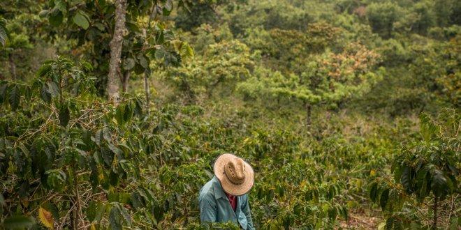 U.S. Aid to Central America Hasn't Slowed Migration. Can Kamala Harris?