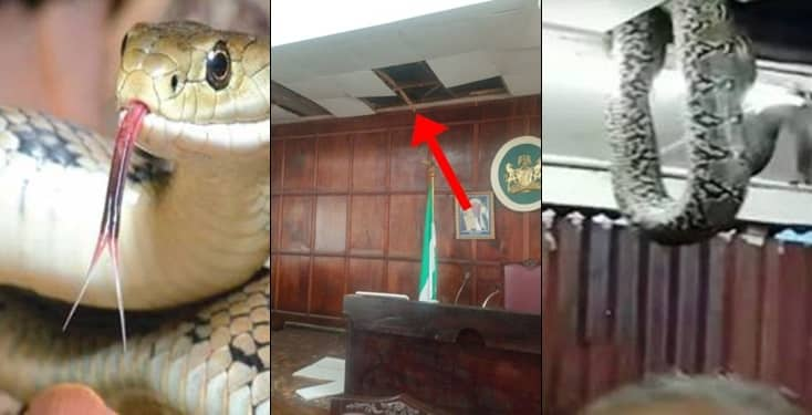 Pandemonium as three snake chase lawmakers out of House of Assembly