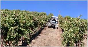 abacela-vineyards