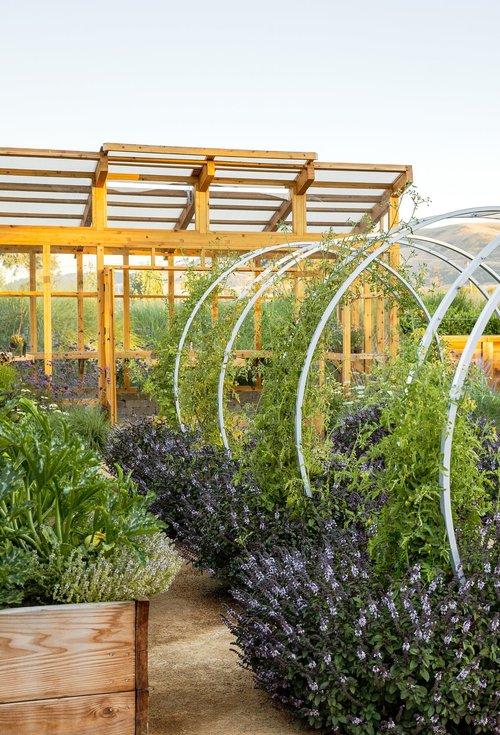 Cornerstone farm garden.jpg
