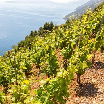 Dingač – Croatia's version of Bordeaux