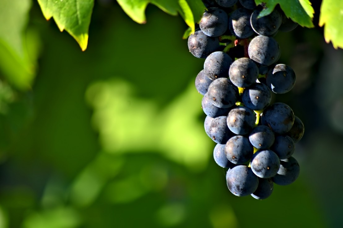 Natural wine: not just for hipster somms