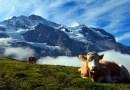 5 อันดับโรงแรมเมือง Grindelwaldเมืองในฝัน สวรรค์แห่งขุนเขา ประเทศสวิตเซอร์แลนด์