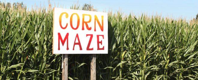 Neberry Corn Maze