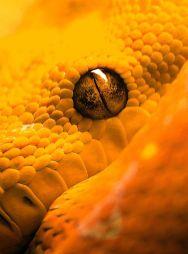 Arancione13