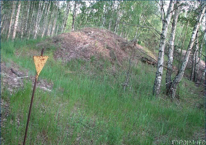 Насыпь с погибшими деревьями