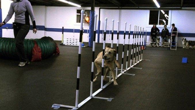 training-dog-school