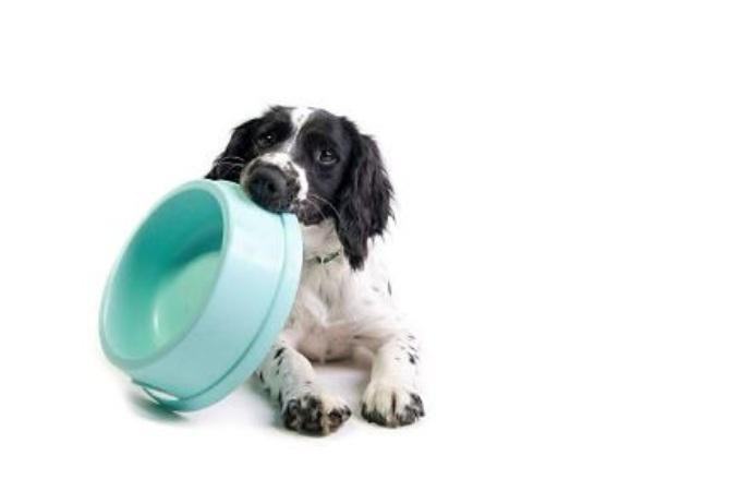 Restricción de proteínas en perros