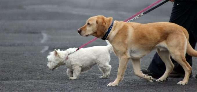 Correas largas para perros