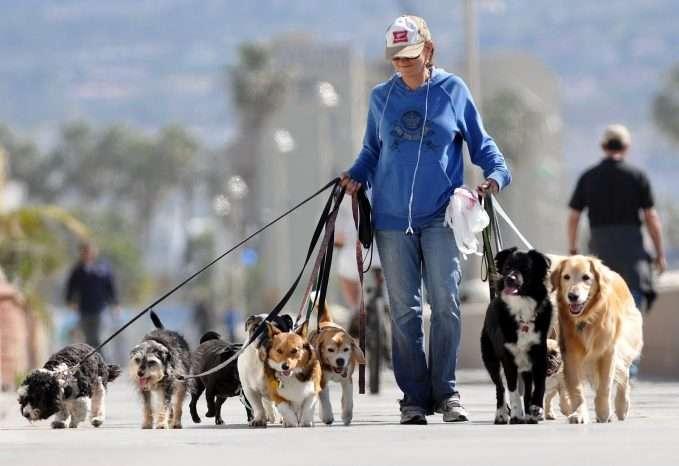 paseo con tu perro
