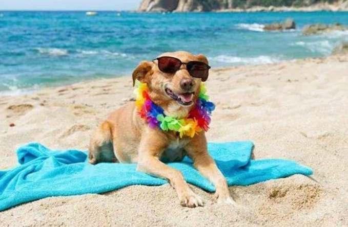 Playas que admiten perros en España - perro tomando el sol
