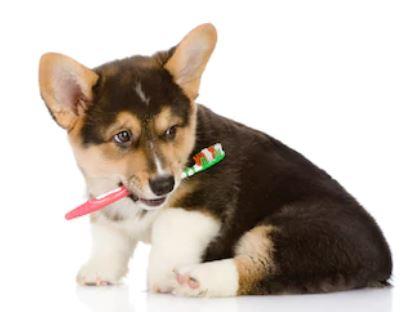 Dentadura de perros