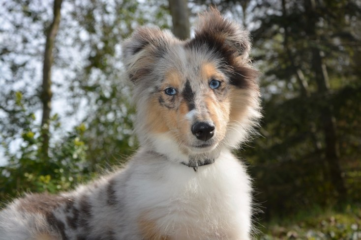 Pienso Happy Dog: opiniones