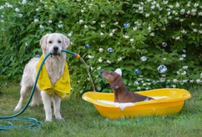 bañar al perro