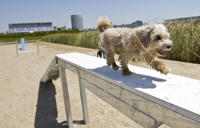 Parque con perros en Getafe