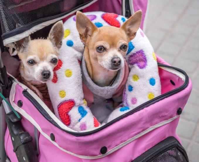Perros que van en transporte público en Sabadell
