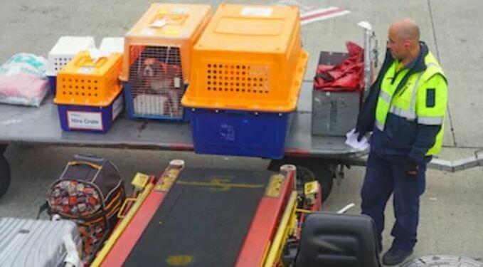 Transporte de perros por avión
