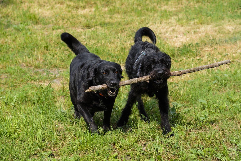 mejores guarderias de dia para perros en madrid