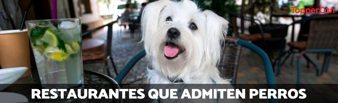 Restaurantes que admiten perros en TopperCan
