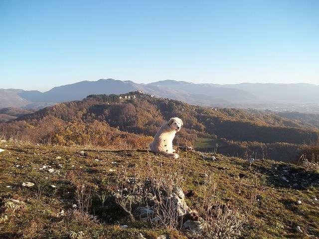 El Pastor del Pirineo es una buena opción para la montaña