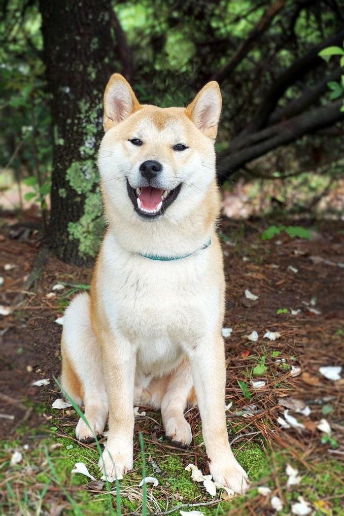 Razas de perros activos -¿Por qué muerde un perro?