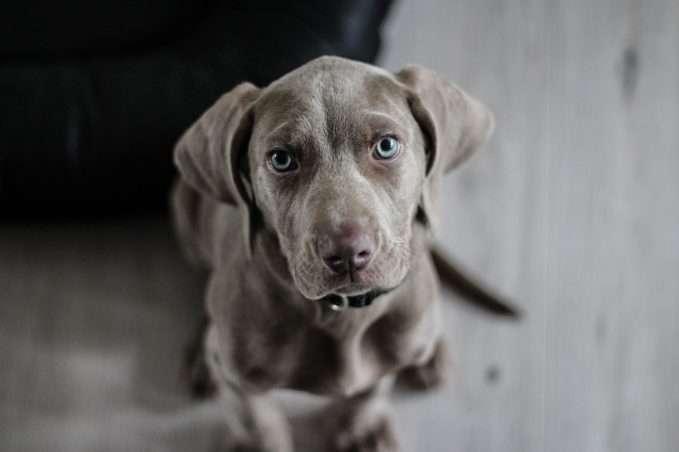 Enfermedades en perros cachorros