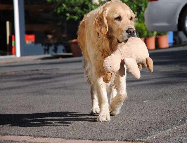 como-evitar-depresion-perros