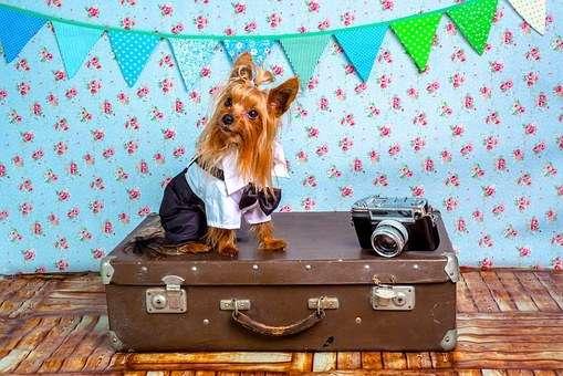 Transporte de perros. Requisitos para viajar con tu perro