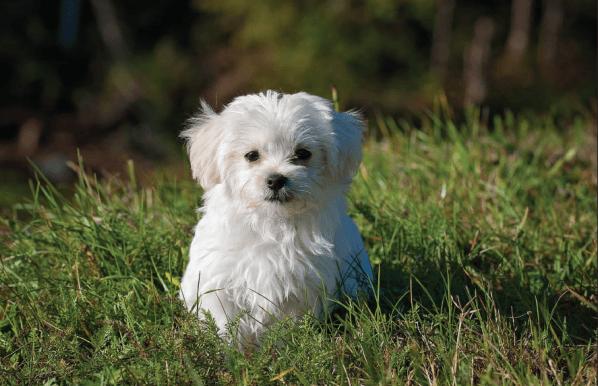 Kit de peluquería canina