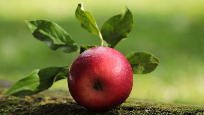La manzana en la dieta Barf
