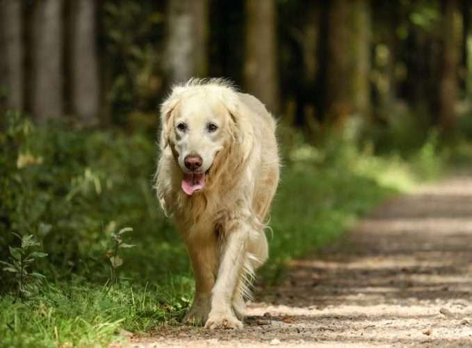 perro perdido en el bosque