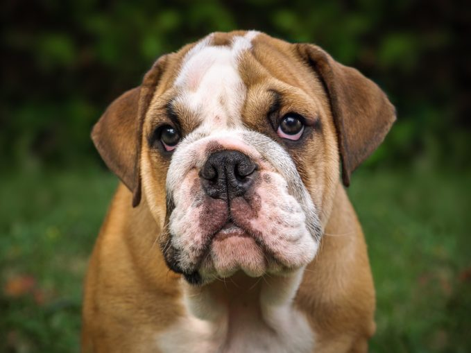 Síntomas, diagnóstico y tratamiento de los perros celíacos