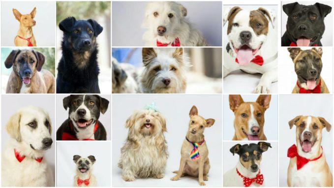 Villa Pepa todos los perros en adopción