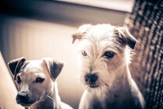 tipos de pelo en el perro cuidados