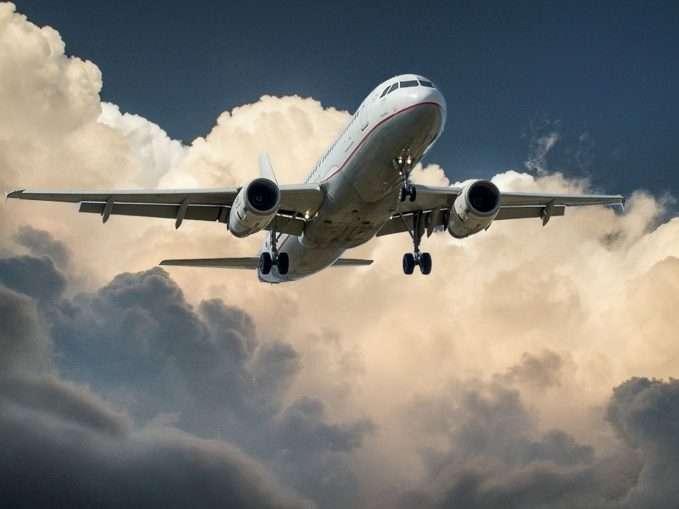 Transporte de perros viajar el perro en avión