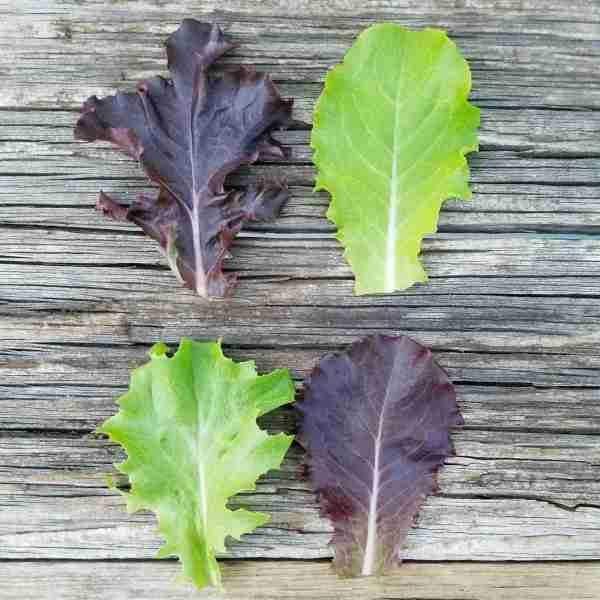 Just lettuce