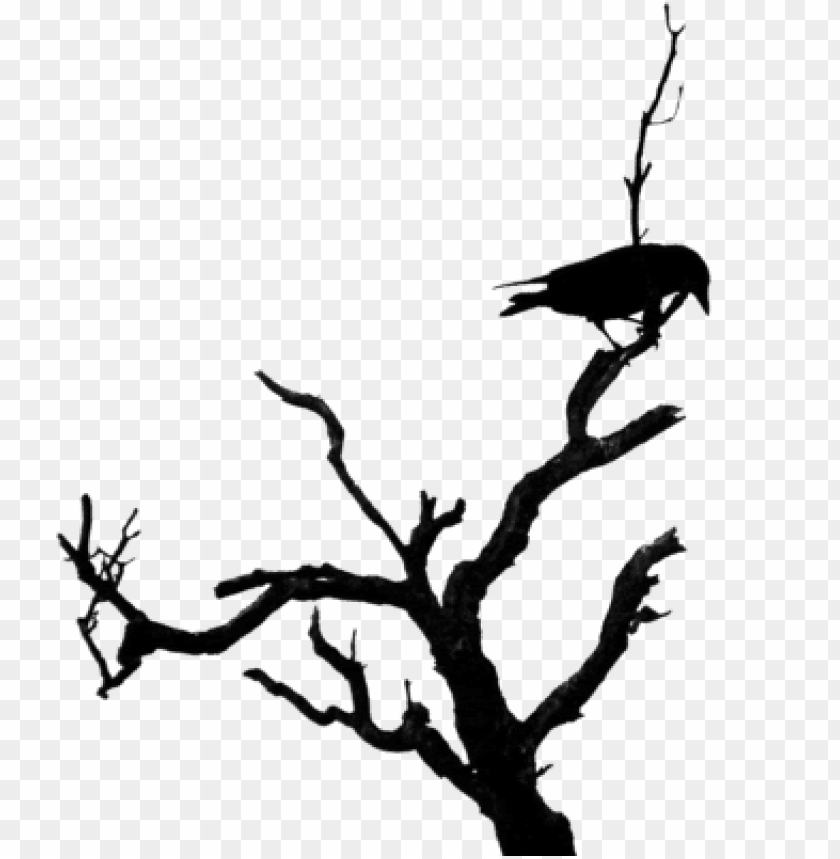 Bird On Dead Tree Png Image With Transparent Background Toppng