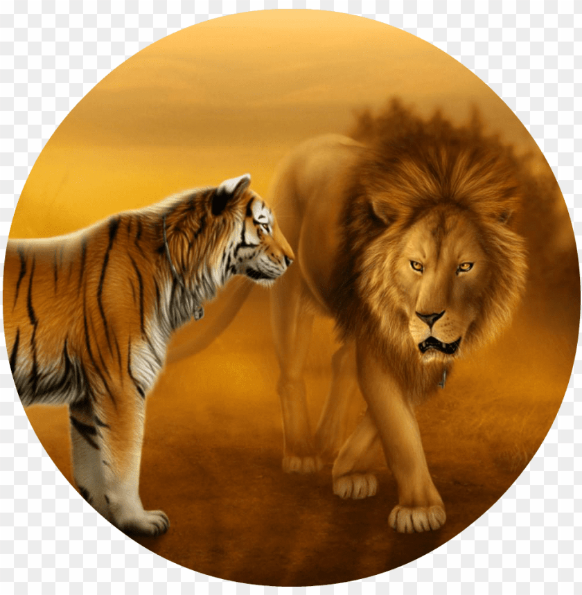 Wallpapers Of Tigers And Lions Dekstop Wallpaper Hd Lion And Tiger Face To Face Png Image With Transparent Background Toppng
