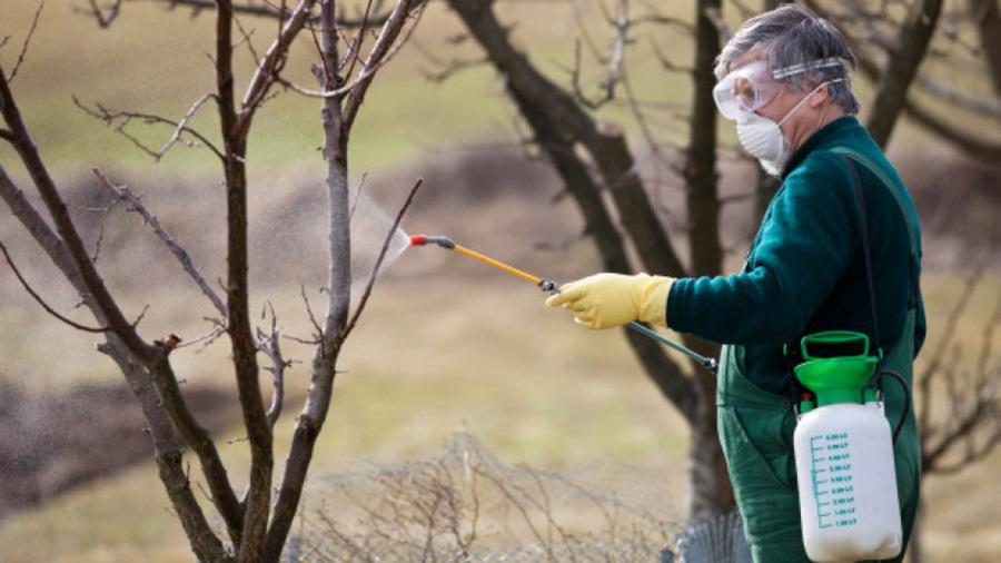 Прво пролећно прскање воћа: Практични савети како да извршите превентивно прскање старих и запуштених воћака