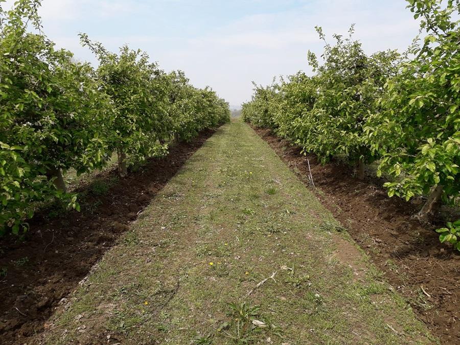 Улагање у удруживање пољопривредника: У задруге уложено 1,7 милијарди