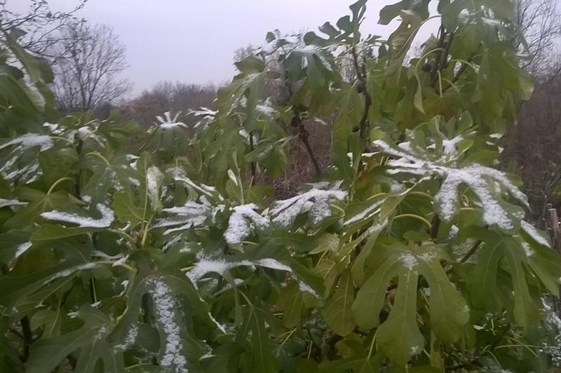 Метеоролози упозоравају: Наредних дана мраз прети повртарским културама