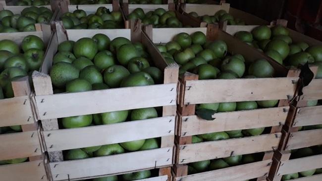Лакши извоз воћа и поврћа у Руску Федерацију