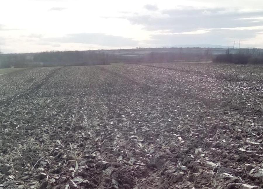 Добри услови за сетву кукуруза