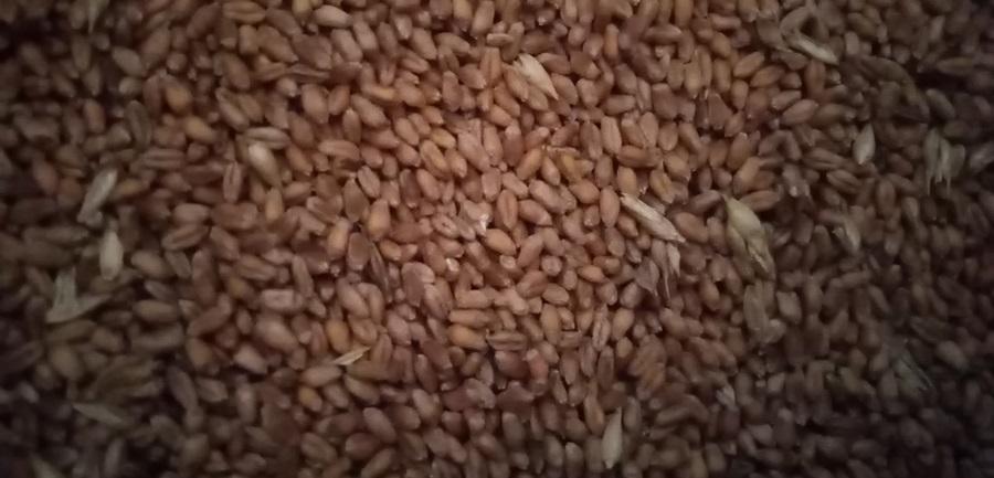 Продуктна берза: Снажан пад цене пшенице, соја скупља