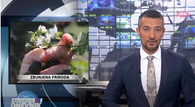 Природа се збунила: У воћњацима око Тополе воће и зри и цвета у исто време (ВИДЕО)
